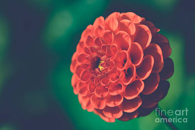 Red Flower Against Greenery Poster