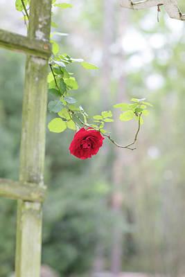 Red Flower Garden Poster