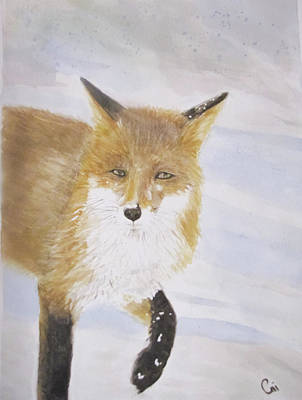 Red Fox Walk Poster