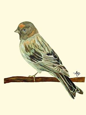 Red-fronted Serin Poster