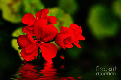 Red Geranium On Water Poster by Kaye Menner