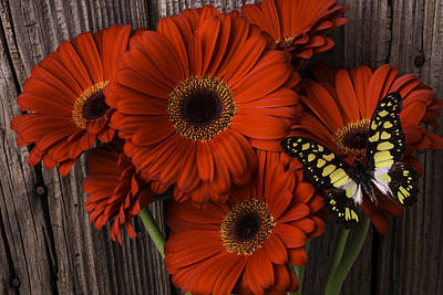 Red Gerbera Daisies With Butterfly Poster by Garry Gay