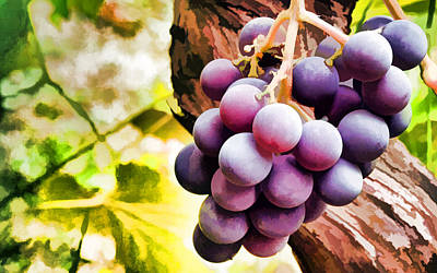 Red Grapes In The Vineyard With Boke Poster