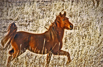 Red Horse Art Poster
