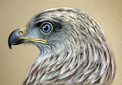 Red Kite Poster by Mary Mayes