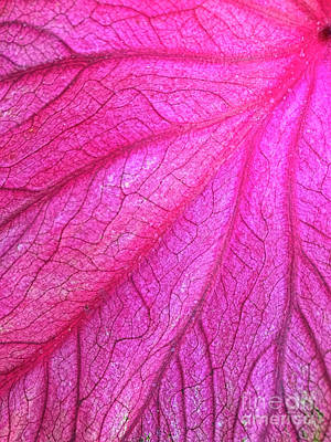 Red Leaf Arteries Poster