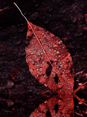Red Leaf In The Rain Poster