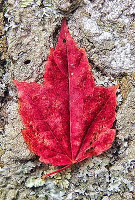Red Leaf, Lichen 8797 Poster