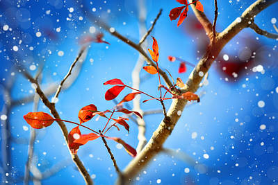Red Leaves On Blue Background Poster