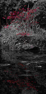 Poster featuring the photograph Red Leaves Reflected by Scott Lyons