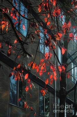 Poster featuring the photograph Red Leaves by Yulia Kazansky