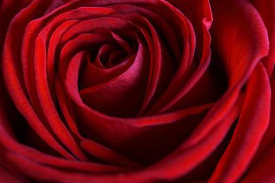 Red Love Poster by Cindy Grundsten