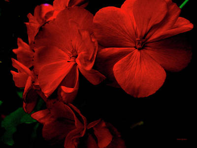 Red  Midnight Magic Flowers Poster