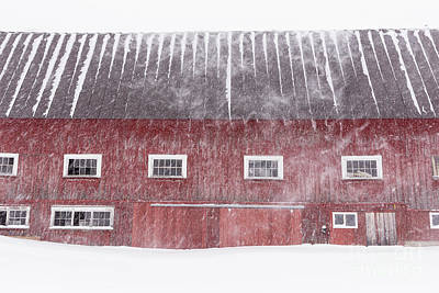 Red New England Cow Barn On Dairy In Winter Storm Poster by Edward Fielding