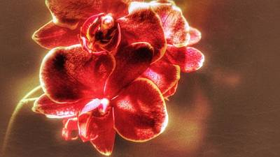 Poster featuring the photograph Red Orchid by Isabella F Abbie Shores FRSA