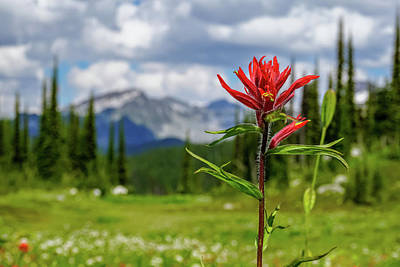 Red Paintbrush On Mount Revelstoke Poster