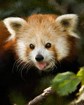 Poster featuring the photograph Red Panda by Lana Trussell