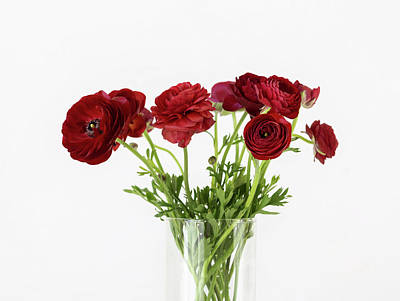 Poster featuring the photograph Red Ranunculus by Kim Hojnacki