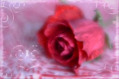 Poster featuring the photograph Red Rose Love by Diane Alexander