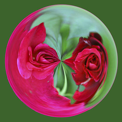 Poster featuring the photograph Red Rose Orb by Bill Barber