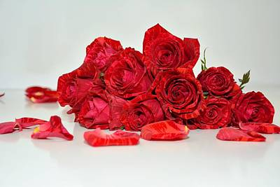 Red Roses And Rose Petals Poster