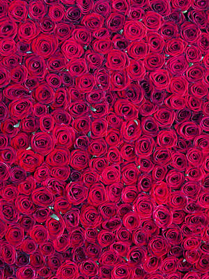 Red Roses Poster by Vitor Costa