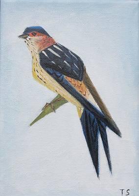 Red-rumped Swallow Poster by Tamara Savchenko