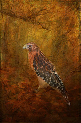 Red Shouldered Hawk In Woodlands Poster by Carla Parris