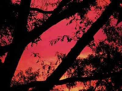 Poster featuring the photograph Red Sky by Susan Carella