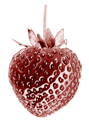 Red Strawberry Botanical Illustration Poster