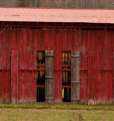 Red Tobacco Barn Poster
