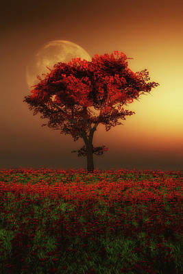 Red Tree In The Evening Poster