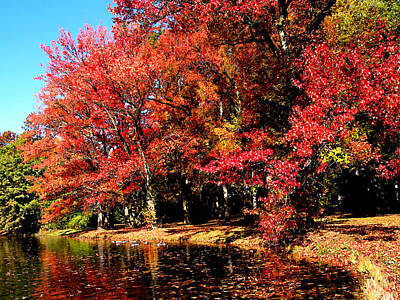 Red Trees By Lake Poster by Susan Savad