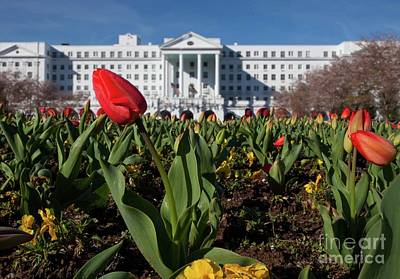 Red Tulip At The Greenbrier Poster