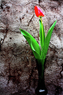 Red Tulip Poster by Gray  Artus
