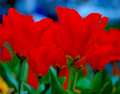Poster featuring the photograph Red Tulips by JoAnn Lense