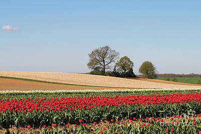 Red Tulips Landscape Poster