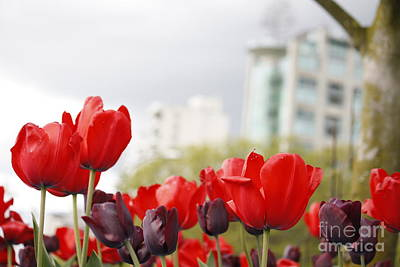 Poster featuring the photograph Red Tulips by Wilko Van de Kamp