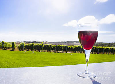 Red Wine Glass At Tasmania Countryside Winery Poster