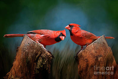 Redbird Sentinels Poster by Bonnie Barry