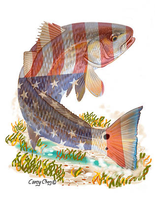 Redfish, White And Blue Poster by Carey Chen