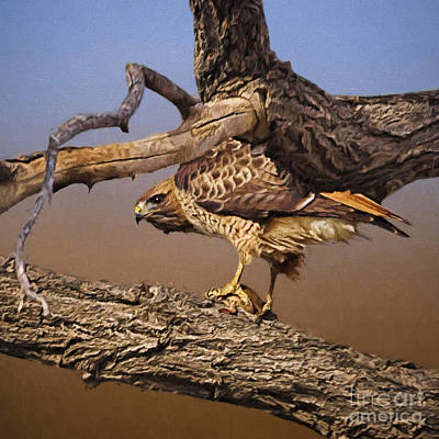 Red-tailed Hawk Guards His Dinner Poster by Priscilla Burgers