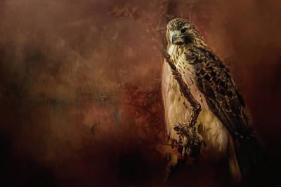 Redtail On Patrol Hawk Art Poster by Jai Johnson