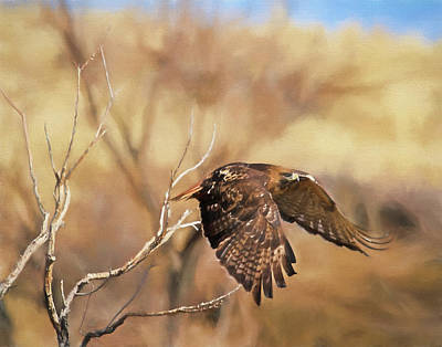 Redtail On The Move Poster by Donna Kennedy