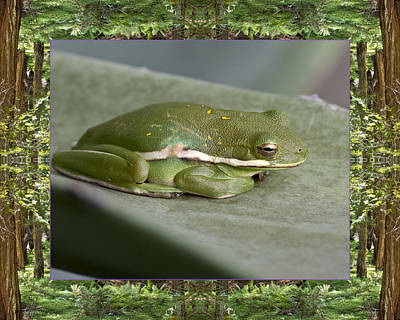 Poster featuring the photograph Redwood Frog by Bell And Todd