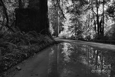 Redwood Reflections Black And White Landscape Poster by Adam Jewell