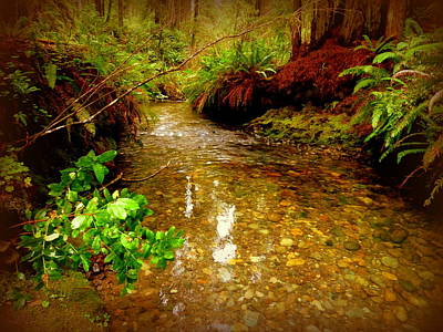 Redwood Stream Reflections Poster by Cindy Wright
