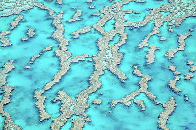 Reef Patterns Poster