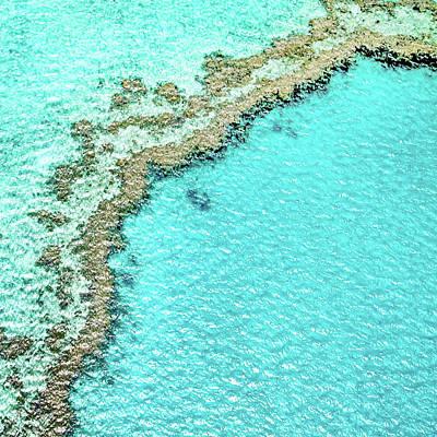 Reef Textures Poster