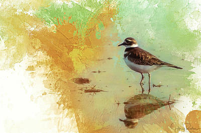 Reflection Of A Killdeer Poster by Jeffrey Rolinc